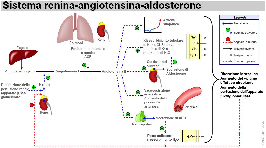 Schema fisiologia sistema
