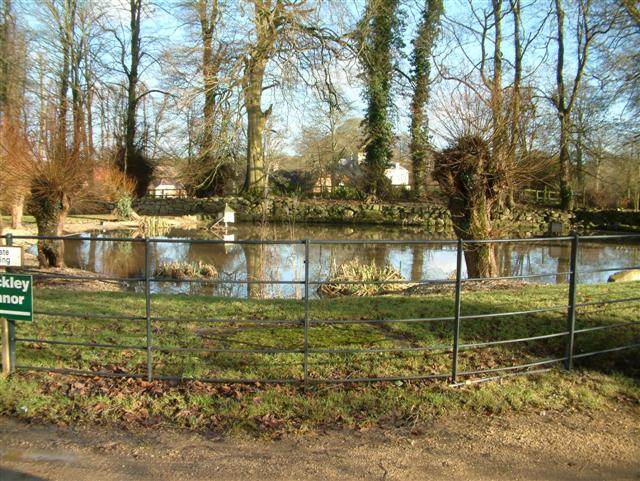 Rockley Duck Pond - geograph.org.uk - 104101