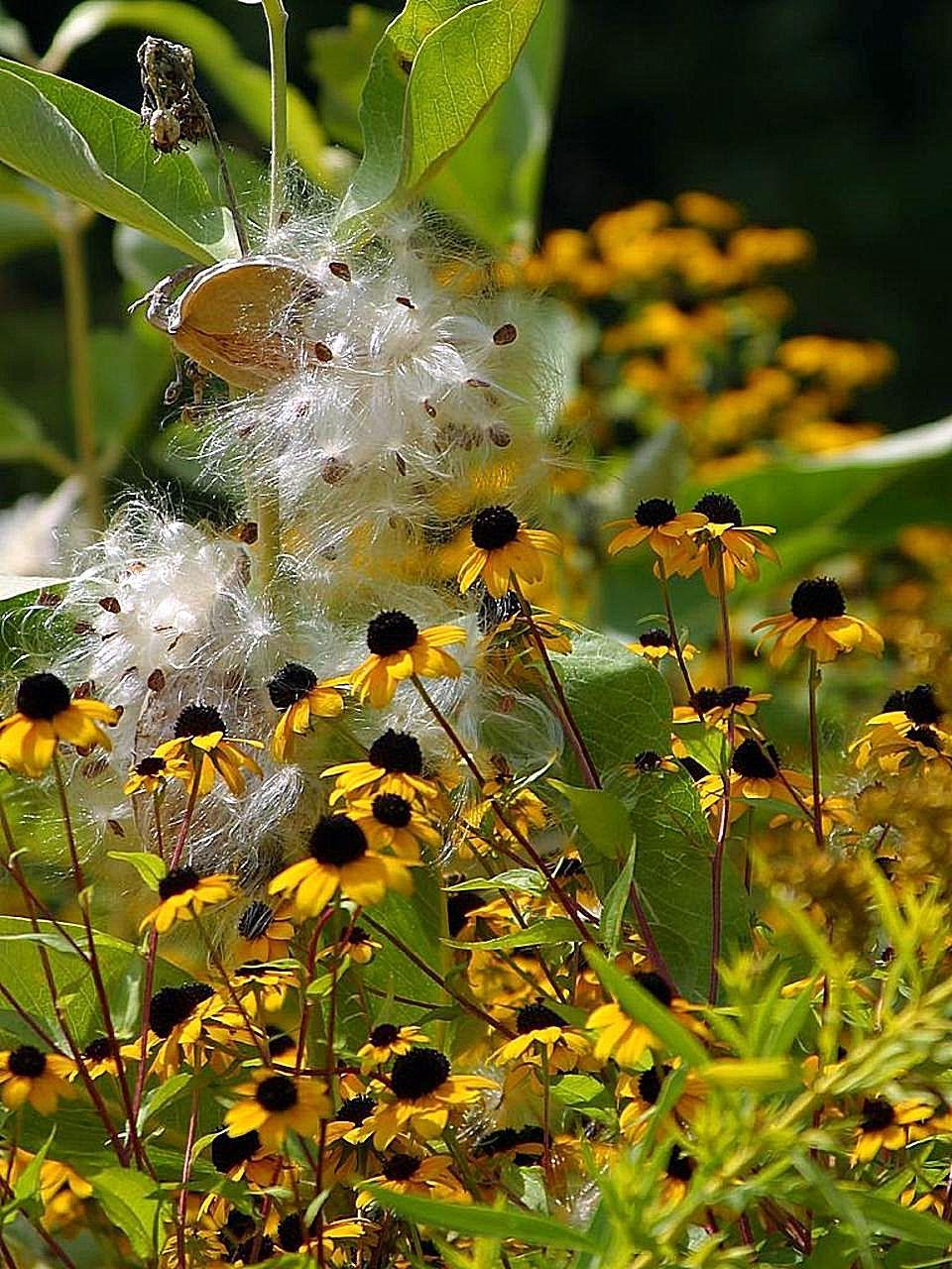 Filesmall Yellow Black Flowers On Grassg Wikimedia Commons