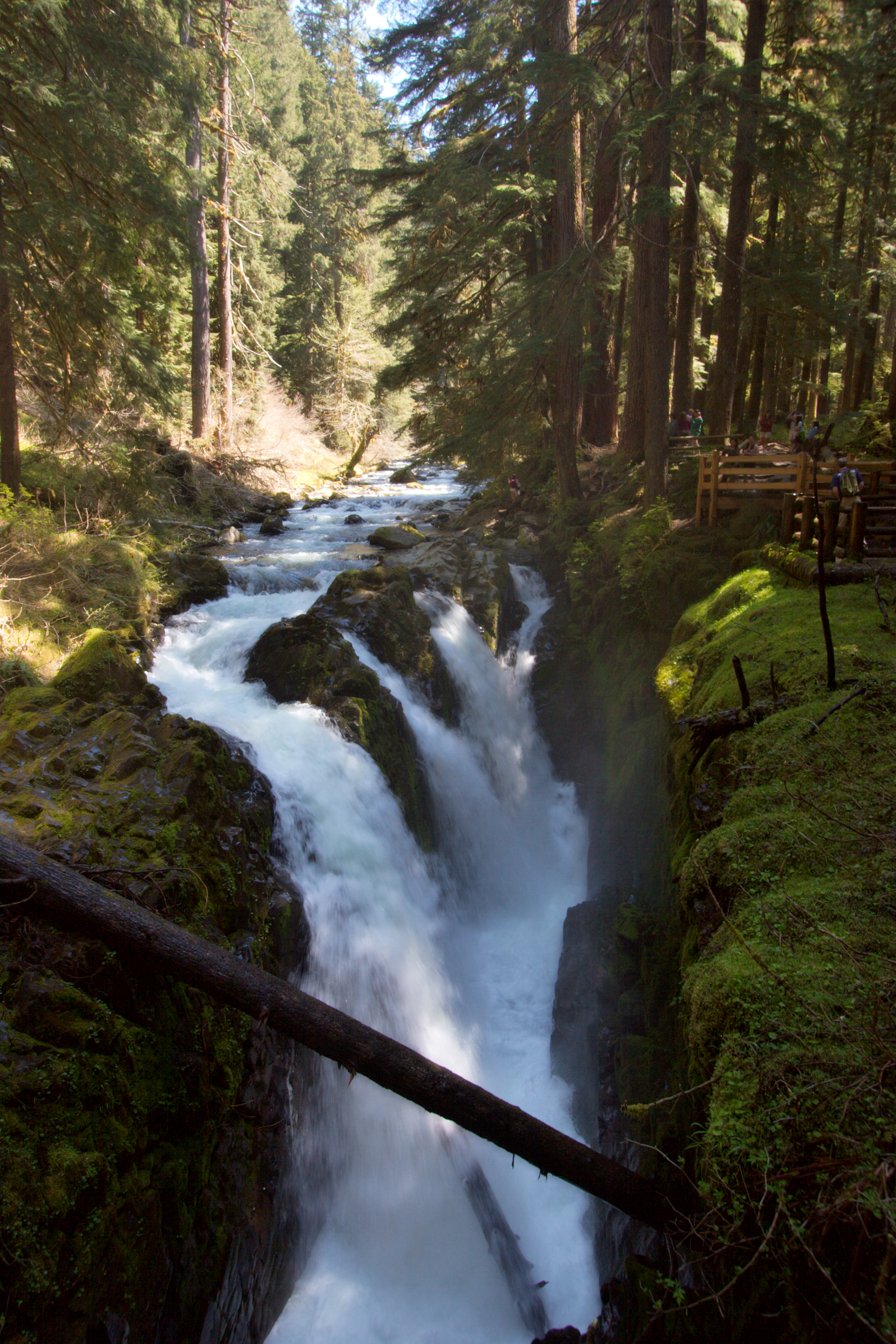 Olympic National Park One Of The Wildest Places Left In