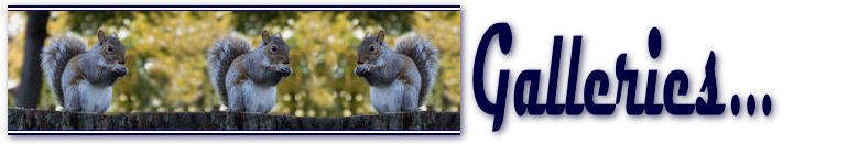 Squirrels 04.jpg