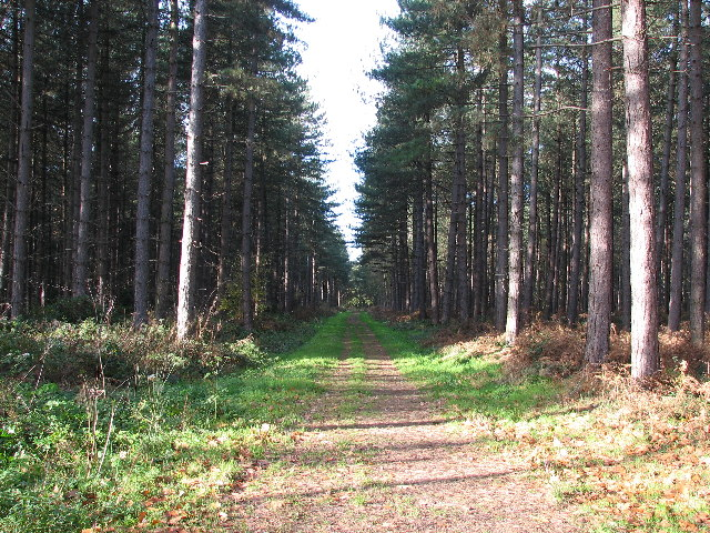 Stapleford Woods - geograph.org.uk - 77581