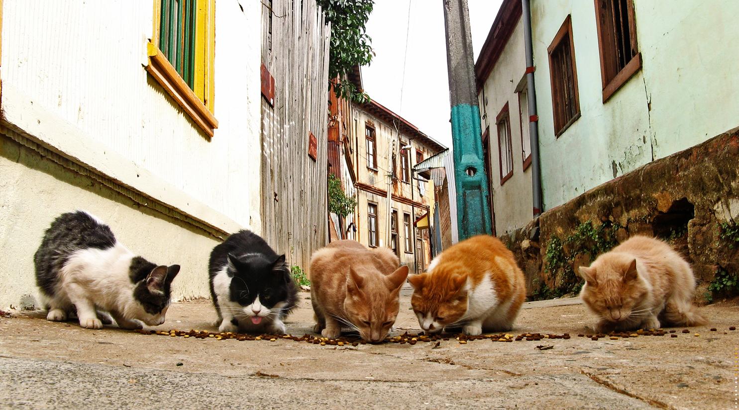 Street Cats The Wikipedia