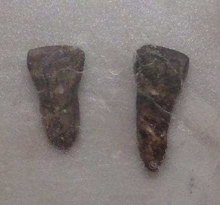 yuanmou dating site En china se encontraron otros yacimientos importantes de fósiles de esta especie como, por ejemplo, lantian, yuanmou, yunxian y hexian los investigadores también.