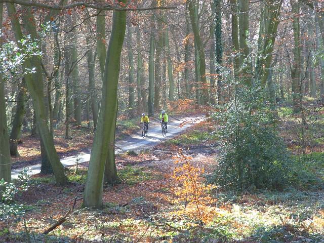 The road through Lambridge Wood - geograph.org.uk - 626600