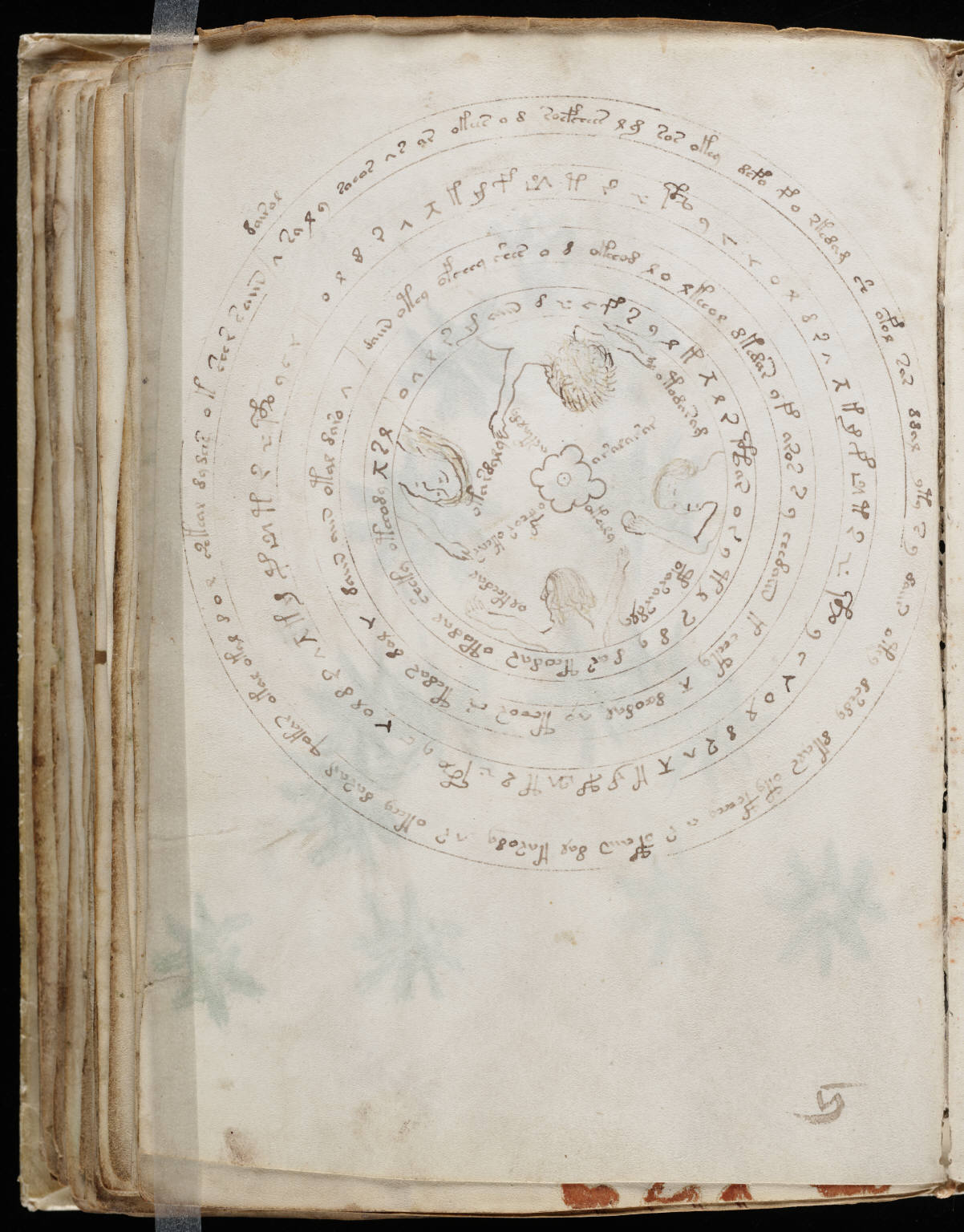 res obscura  images from the voynich manuscript