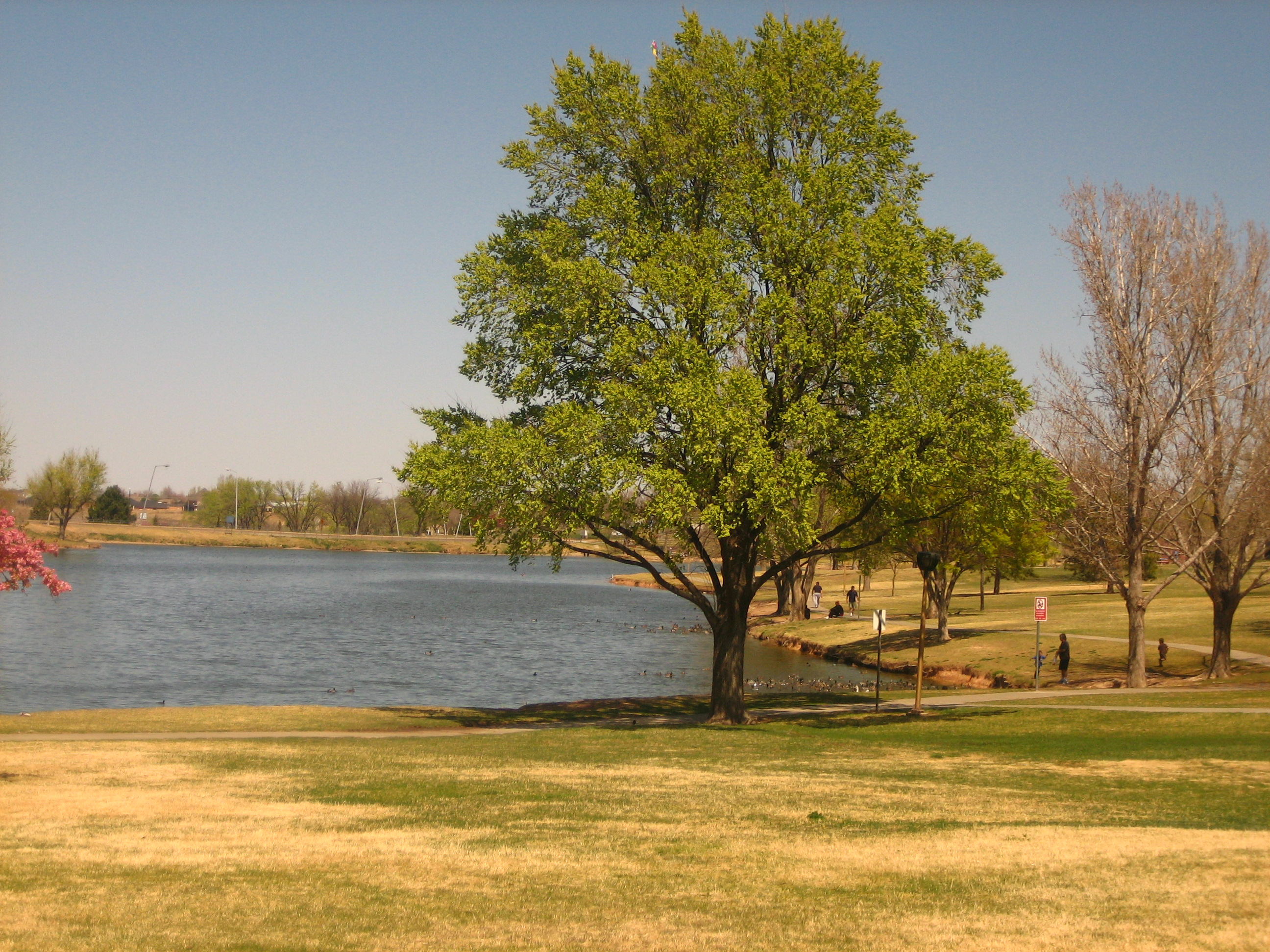 File:Amarillo pond IMG 0153.JPG - Wikimedia Commons