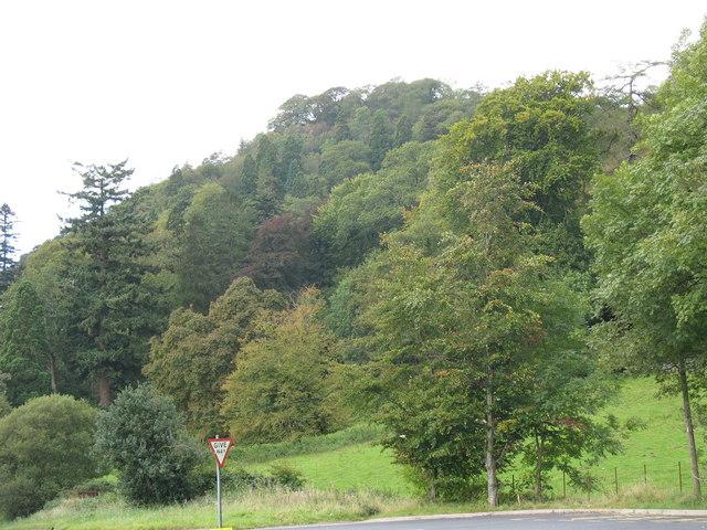 Arwyddion cyntaf yr Hydref. First signs of Autumn in Coed Tan y Bwlch - geograph.org.uk - 569673