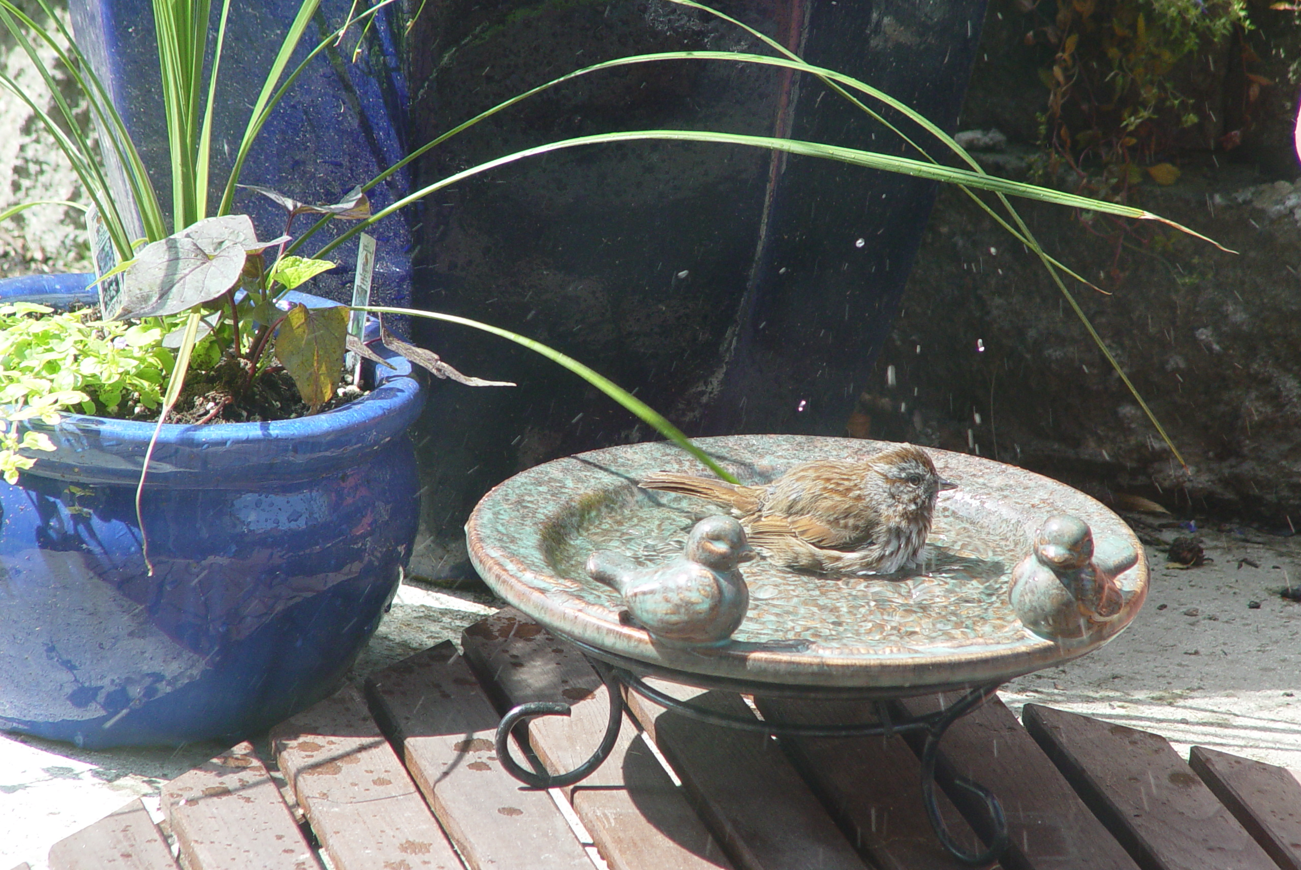 bird bath, bird hot, birdbath, summer bird, how to help birds