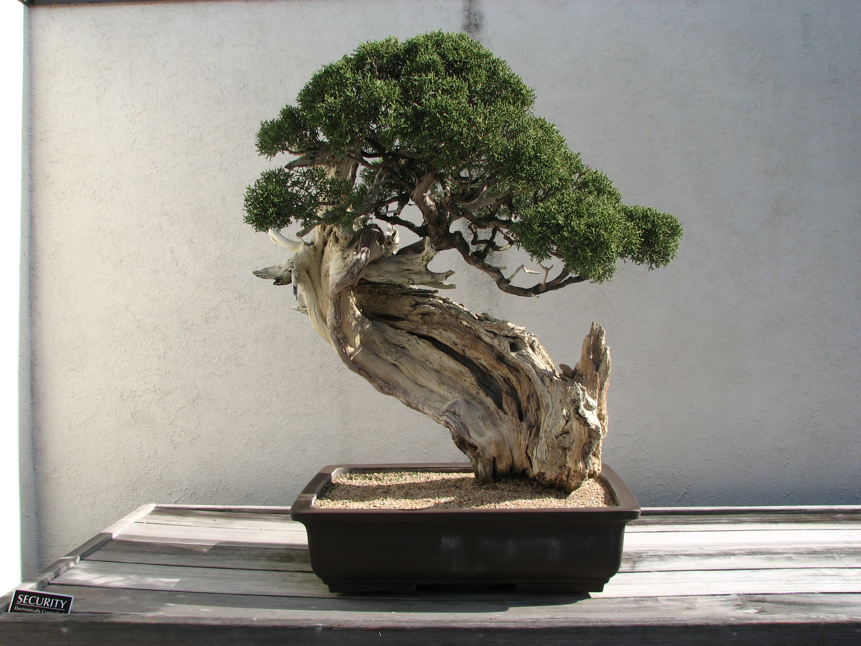 History Of Bonsai Wikipedia