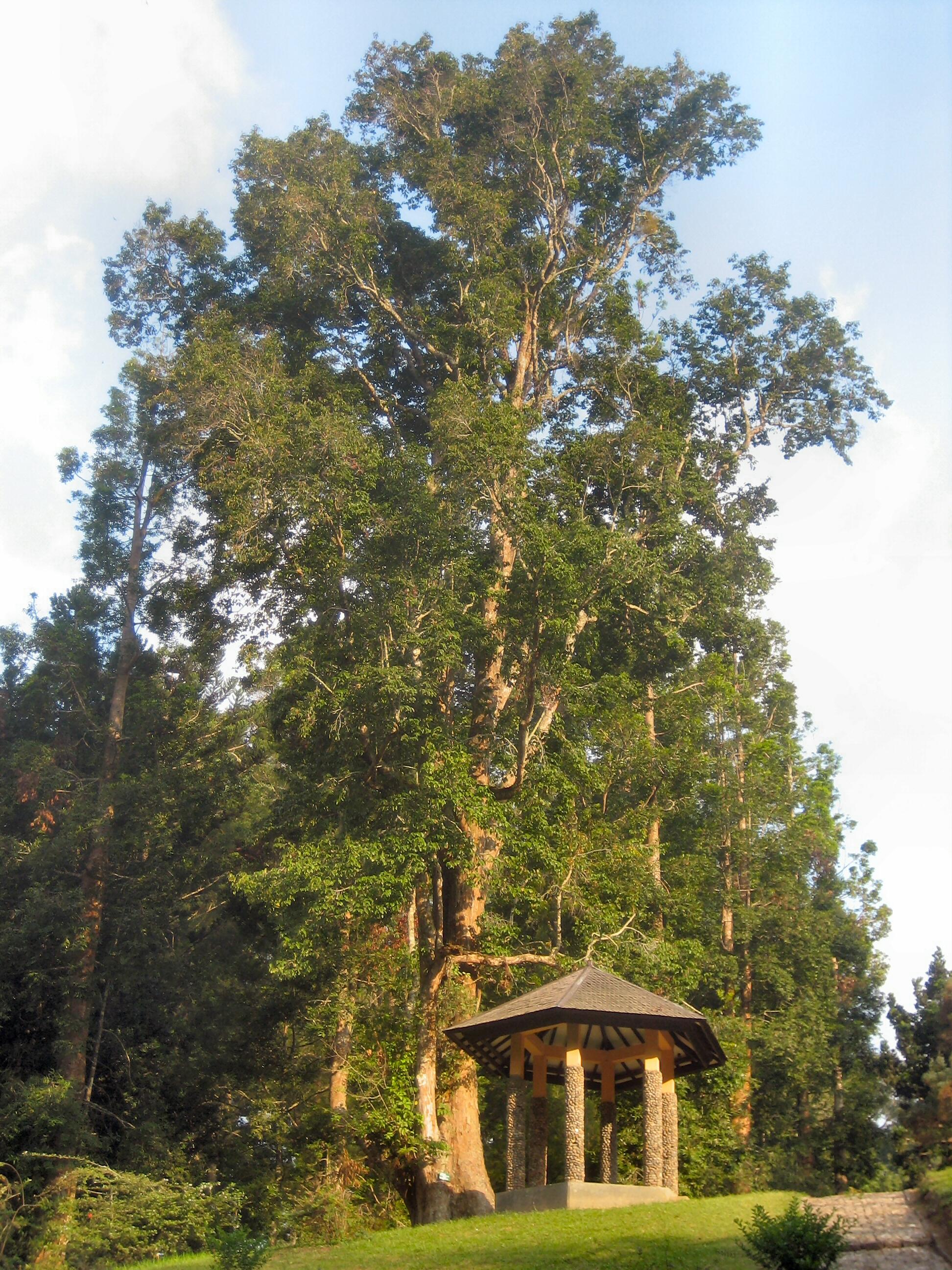Patio - Kebun Raya Cibodas