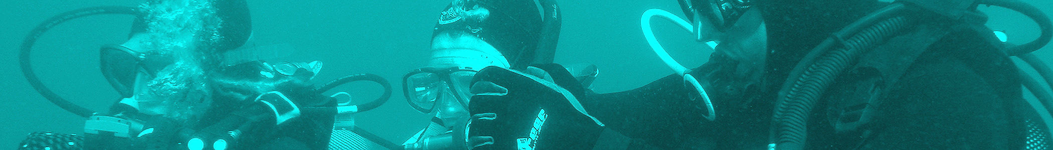 Shark Diving Tours Oahu