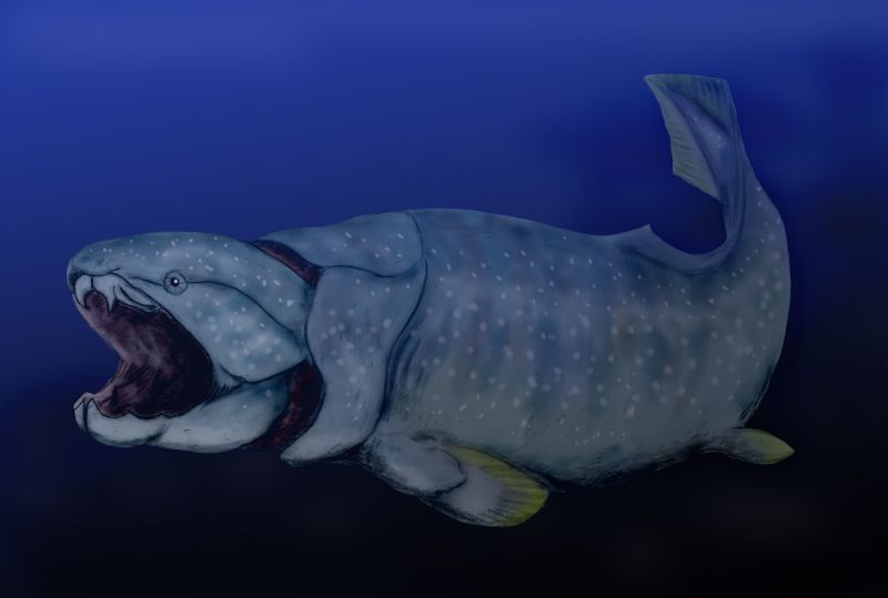 File dunkleosteus wikimedia commons for Did humans evolve from fish
