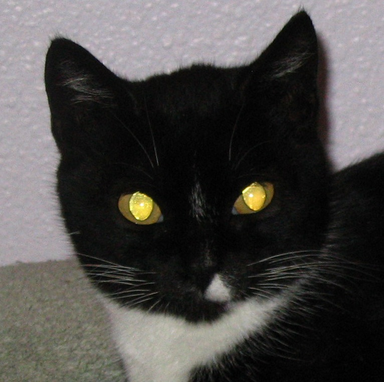 Glowing Cats For Sale In Texas
