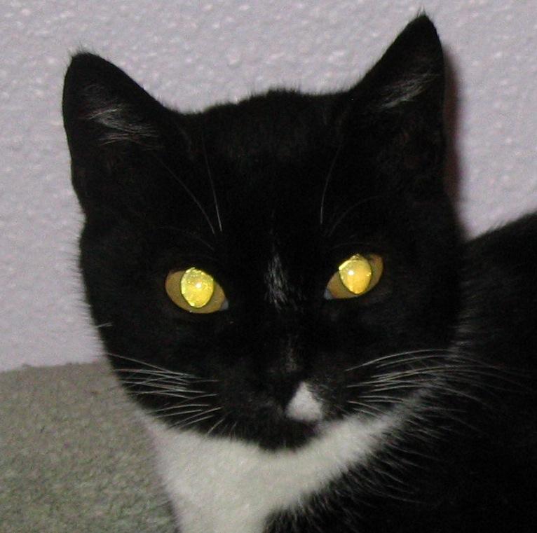 Cats Eyes Reflection