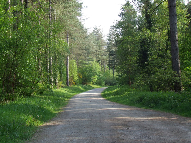 Forest track in Newborough Forest - geograph.org.uk - 177025
