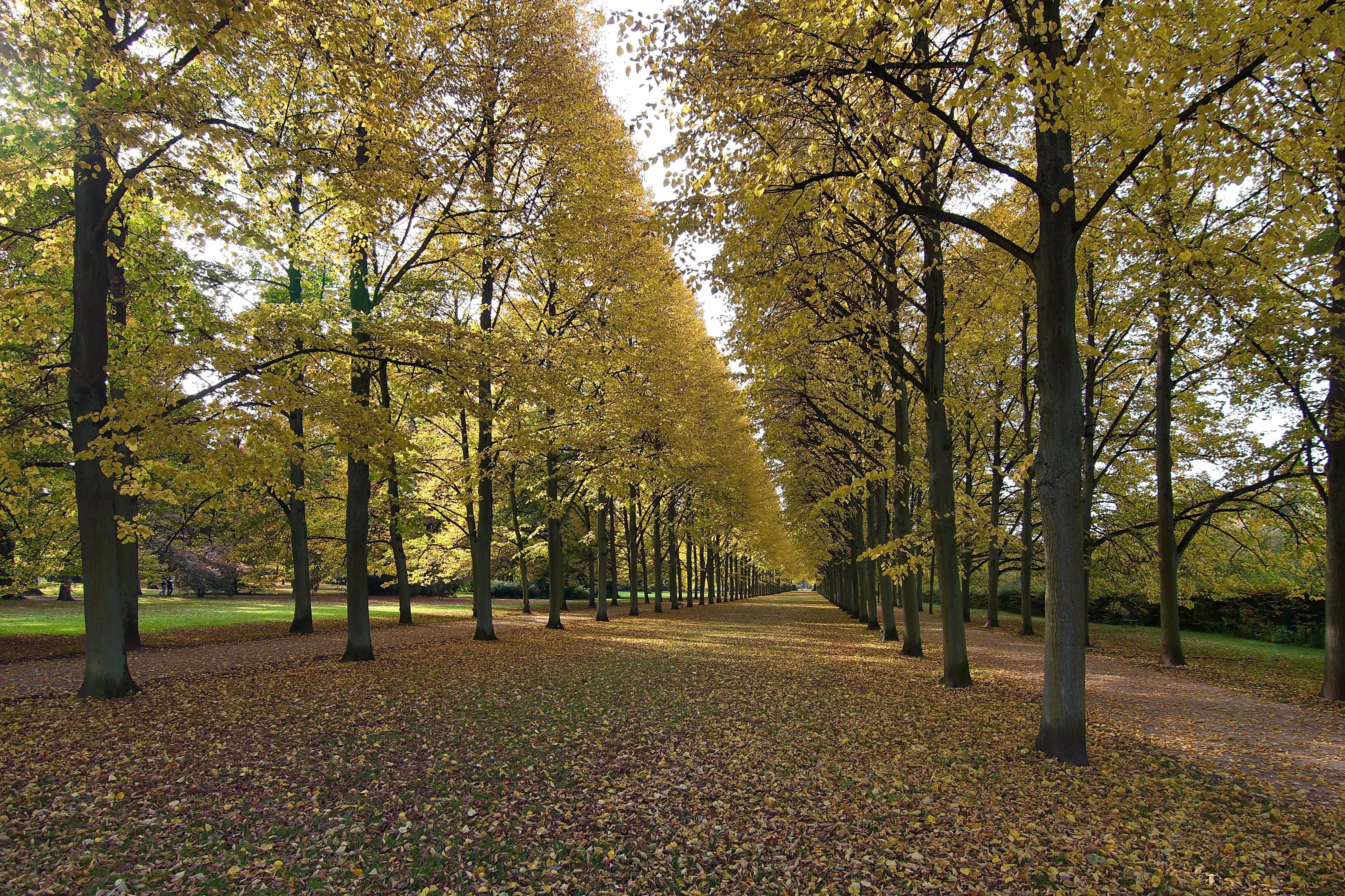 Filefranzösischer Garten Celle Img 3178jpg Wikimedia Commons