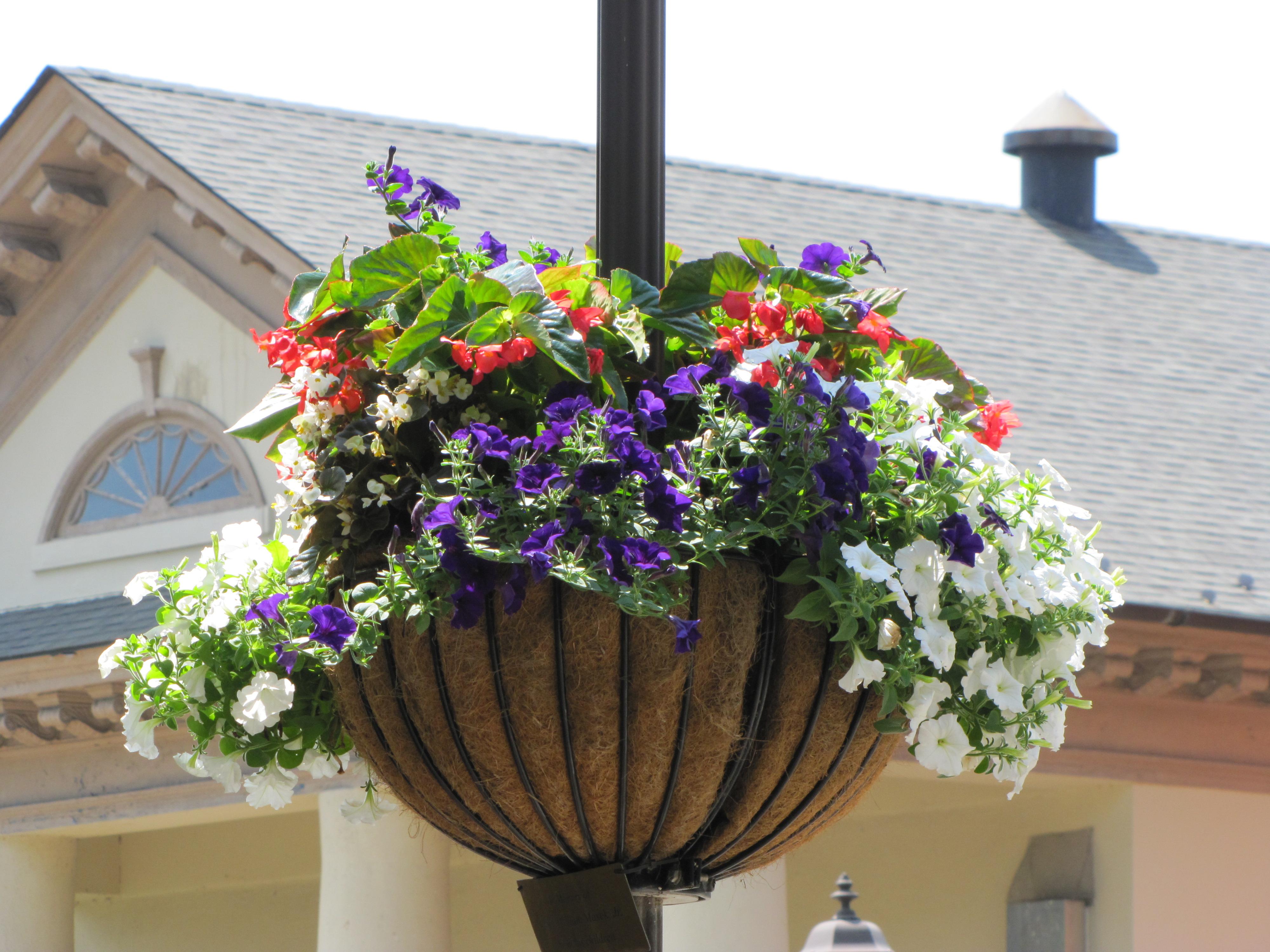 File Gloucester Va Flower Basket By Chuck Thompson Of