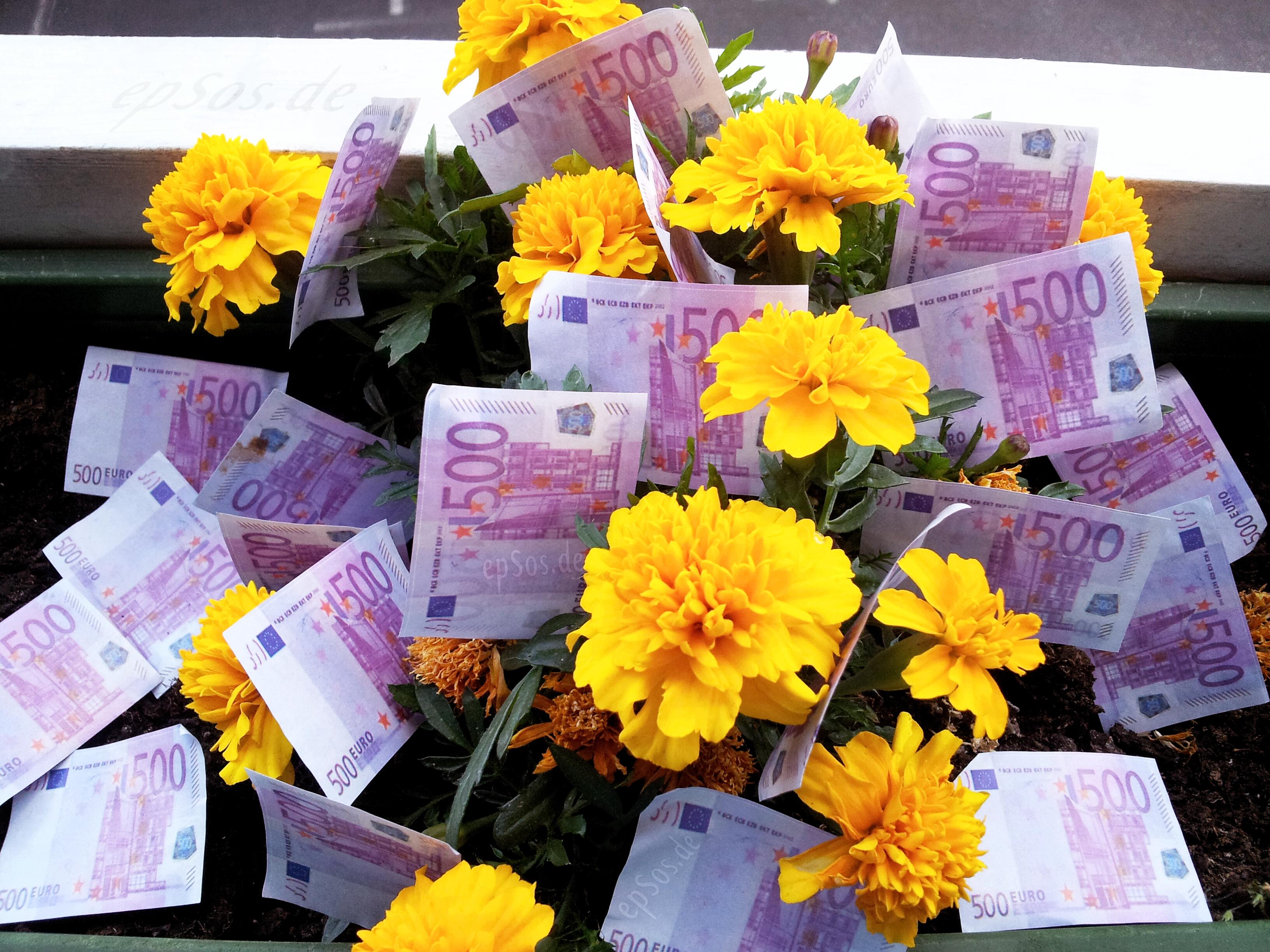 File:Growing Free Money on Flowers.jpg - Wikimedia Commons