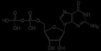 Guanine nucleotide exchange factor