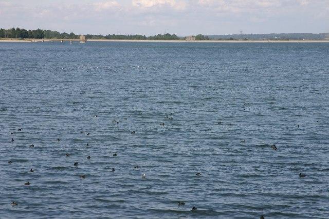 Hanningfield Reservoir - geograph.org.uk - 46487