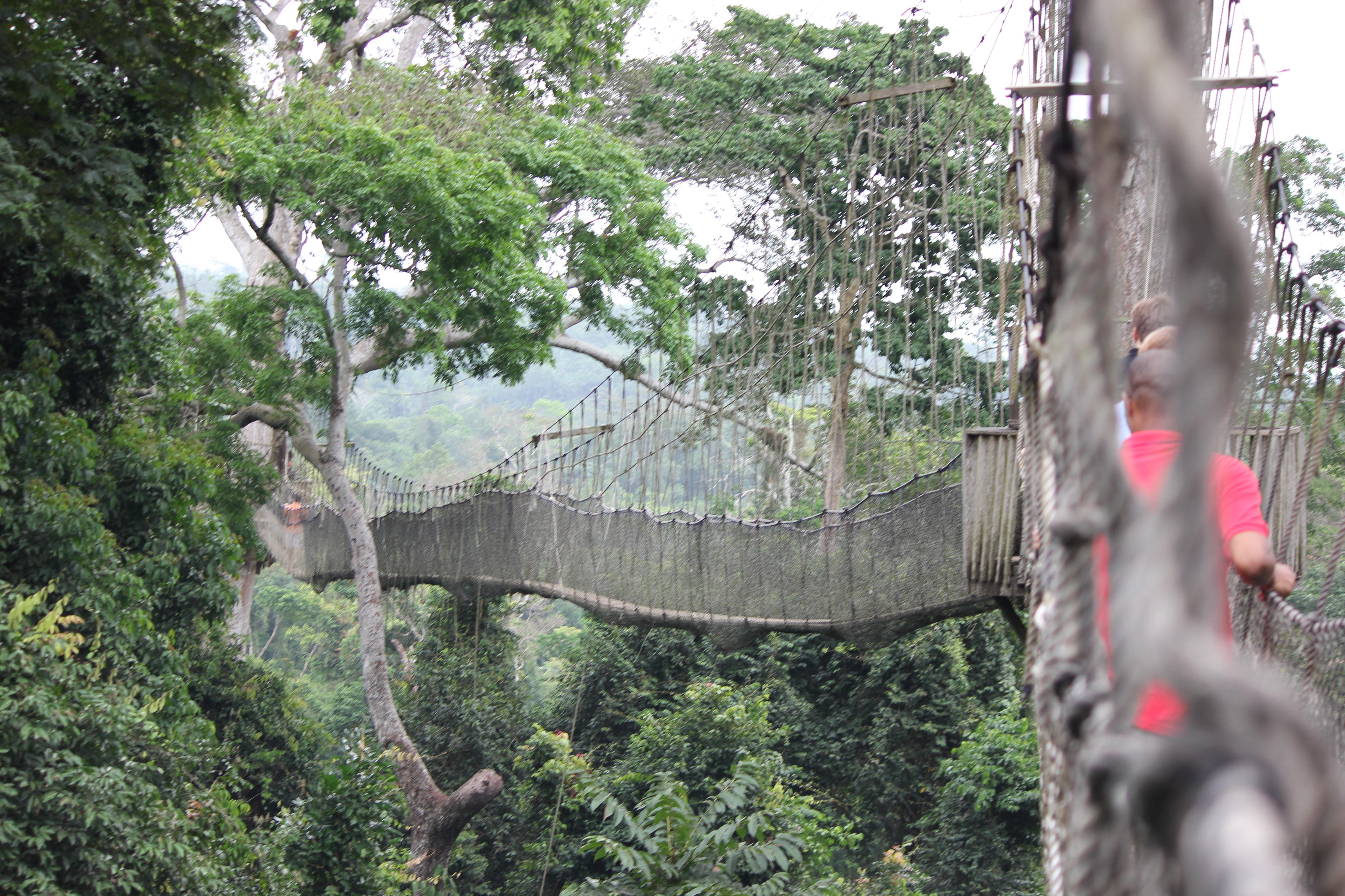FileKakum Canopy Walk Kakum National Park Ghana.JPG & File:Kakum Canopy Walk Kakum National Park Ghana.JPG - Wikimedia ...