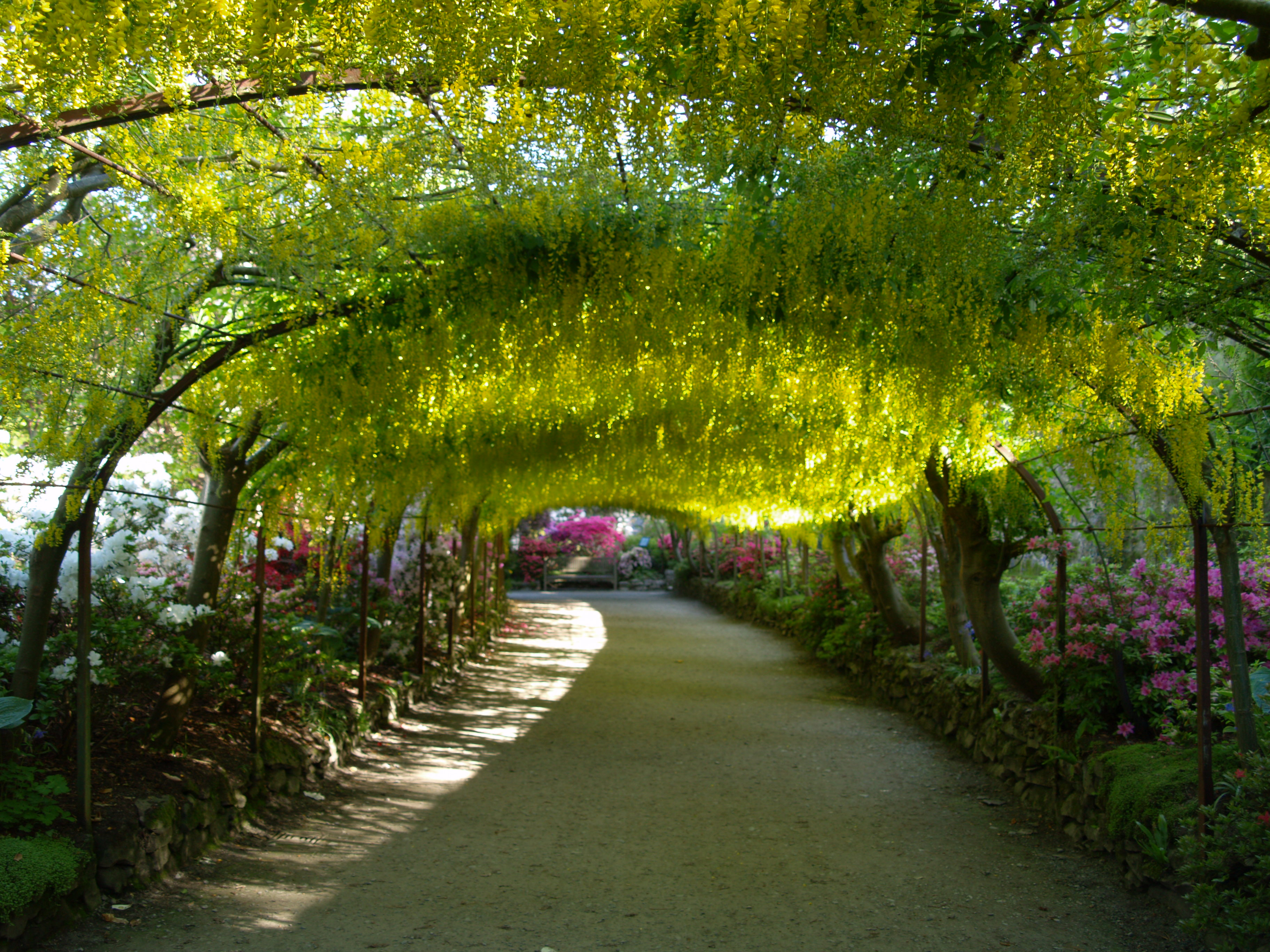 Ravishing Filelaburnum Arch Bodnant Gardenjpg  Wikimedia Commons With Excellent Filelaburnum Arch Bodnant Gardenjpg With Charming Kingsway Covent Garden Also Highline Garden Nyc In Addition Good Restaurants Near Covent Garden And Devonshire Gardens Glasgow As Well As My English Garden Additionally Academy Gardens From Commonswikimediaorg With   Excellent Filelaburnum Arch Bodnant Gardenjpg  Wikimedia Commons With Charming Filelaburnum Arch Bodnant Gardenjpg And Ravishing Kingsway Covent Garden Also Highline Garden Nyc In Addition Good Restaurants Near Covent Garden From Commonswikimediaorg