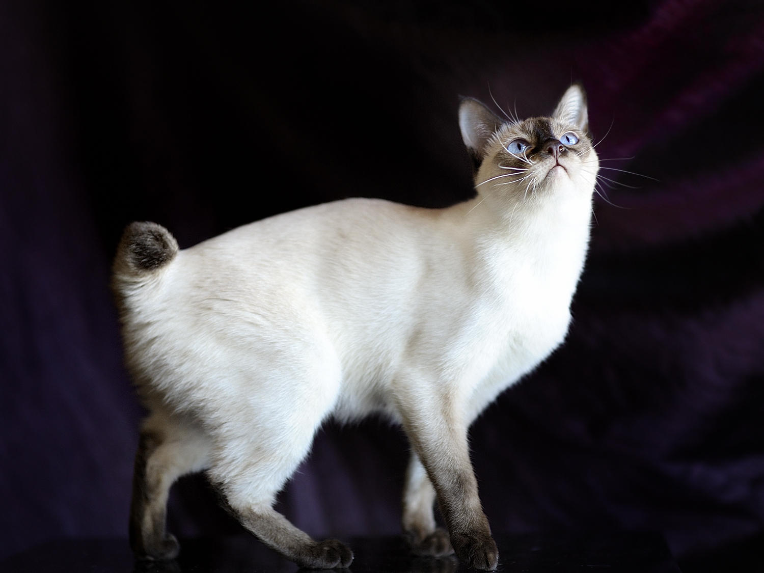Cool Cat Breeds To Own