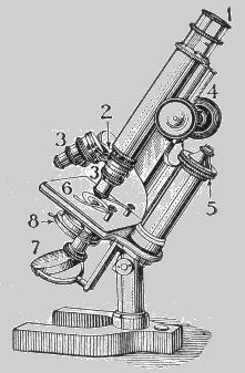 Microscopio óptico. 1-Ocular; 2-Revólver; 3-Obxectivo; 4-Parafuso macrométrico; 5-Parafuso micrométrico; 6-Platina; 7-Espello; 8-Condensador