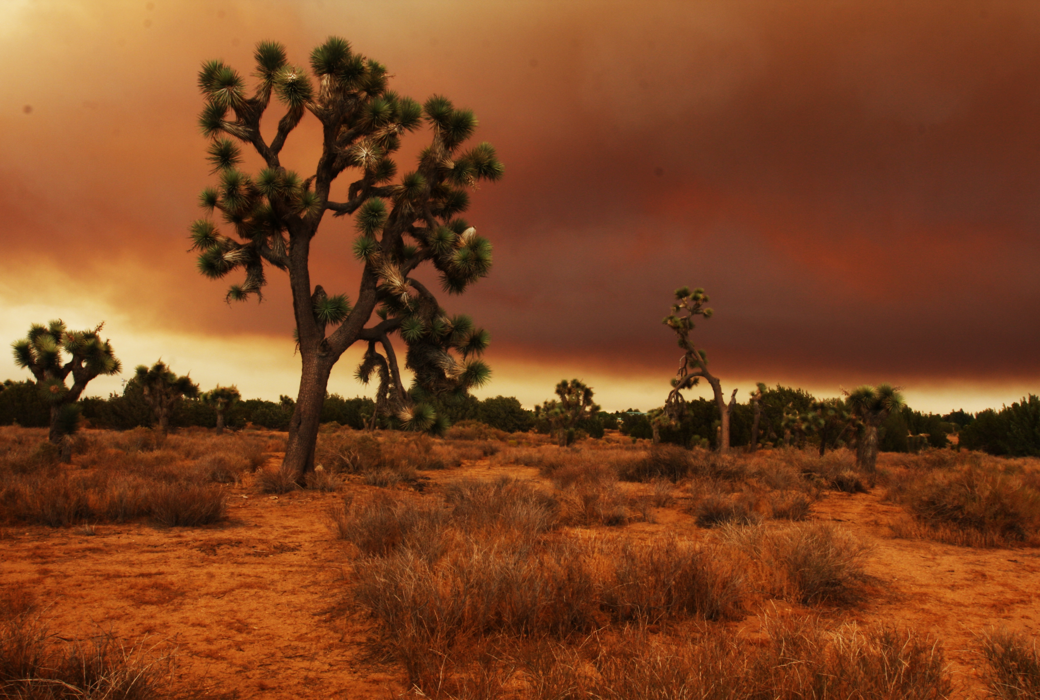 a background information about deserts Learn about the manmade and natural causes of deforestation–and how it's impacting our planet https many former forest lands can quickly become barren deserts.