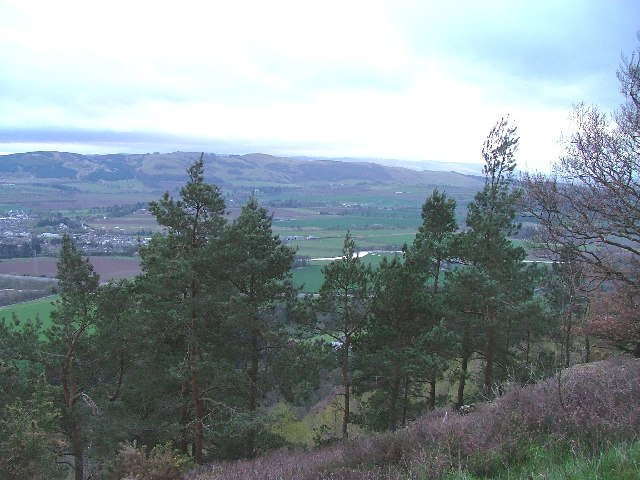 Moncrieffe Hill looking south - geograph.org.uk - 9261