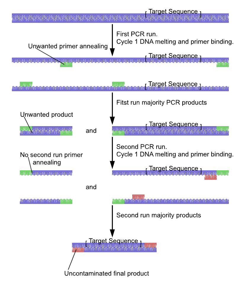 Nested polymerase chain reaction - Wikipedia