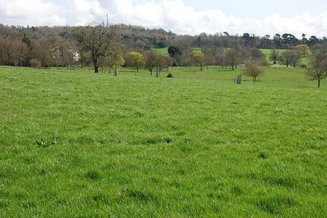 Parkland at Saltram - geograph.org.uk - 1247269
