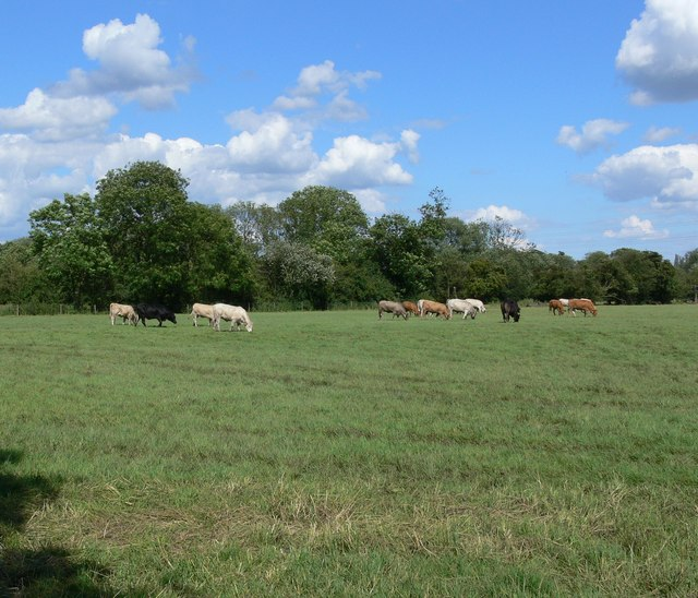 Ratby Meadow - geograph.org.uk - 491717
