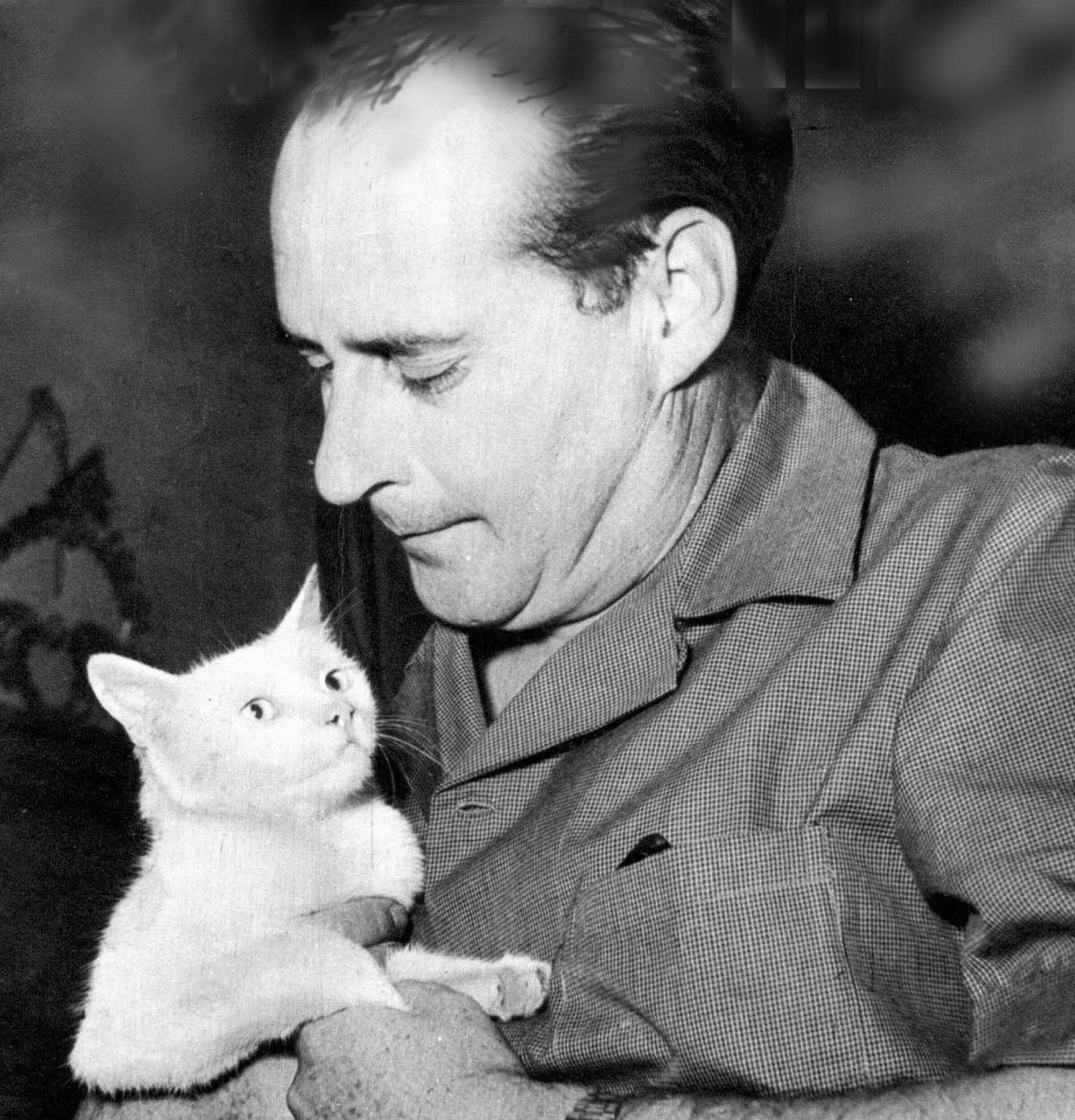 Rossellini and Saha the cat in the segment ''Envy'' from the film ''[[The Seven Deadly Sins (1952 film)|The Seven Deadly Sins]]'' (1952)