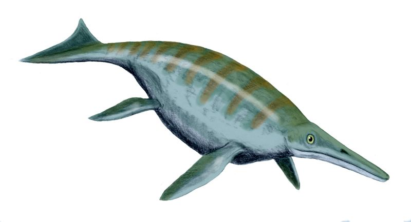 Shonisaurus sikanniensis