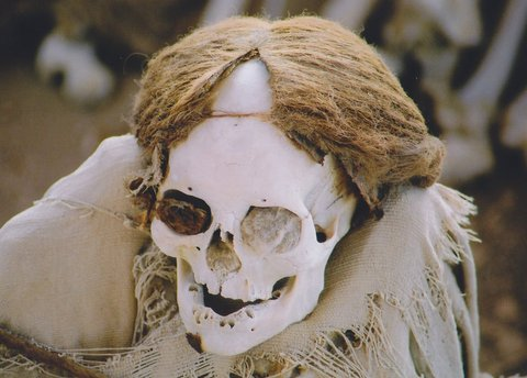 Skull with hair of the nazca culture in Peru