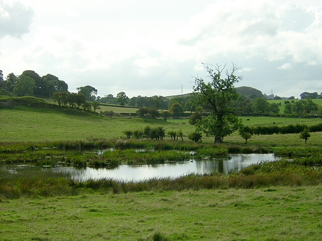 Small Pond Near Balgray Reservoir - geograph.org.uk - 245394