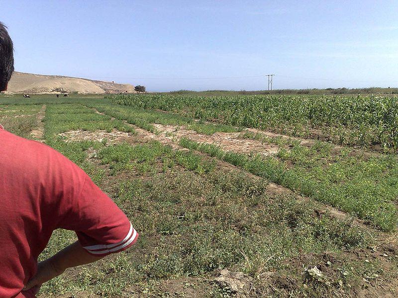Bodemverzouting wikiwand for Soil salinization