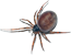 Spider-icon.png