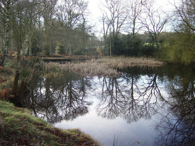 Stroud Pond in Yateley Common Country Park - geograph.org.uk - 664667