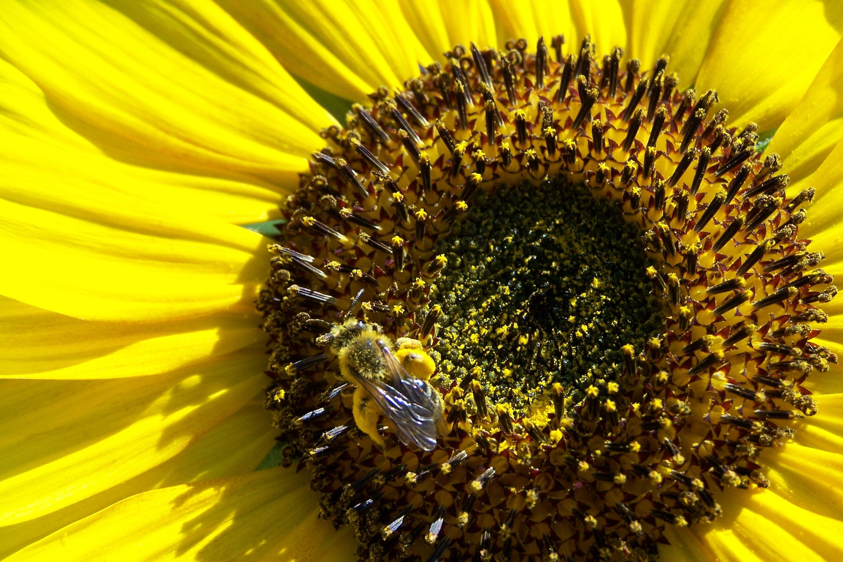 le printemps arrive le pollen aussi voici quelques rem de pour survivre cette allergie. Black Bedroom Furniture Sets. Home Design Ideas