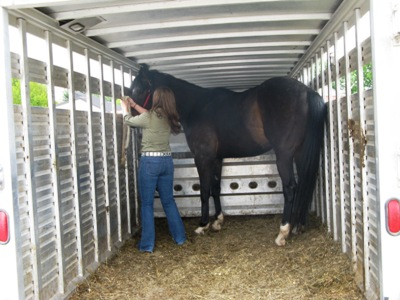 File Trailer24 Horse In Trailer 5910388942 Jpg