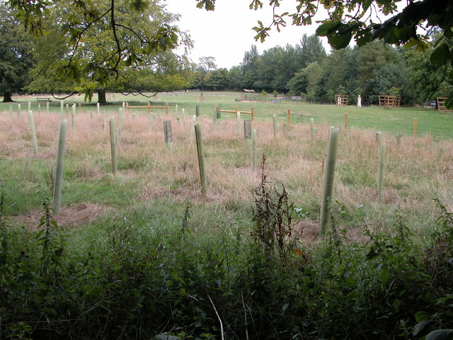 File:Tree saplings near Rooksmoor Copse - geograph.org.uk - 222852.jpg