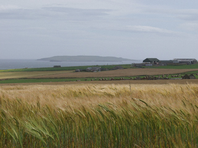 File:Upper Sanday, Toab, Orkney - geograph.org.uk - 232969.jpg