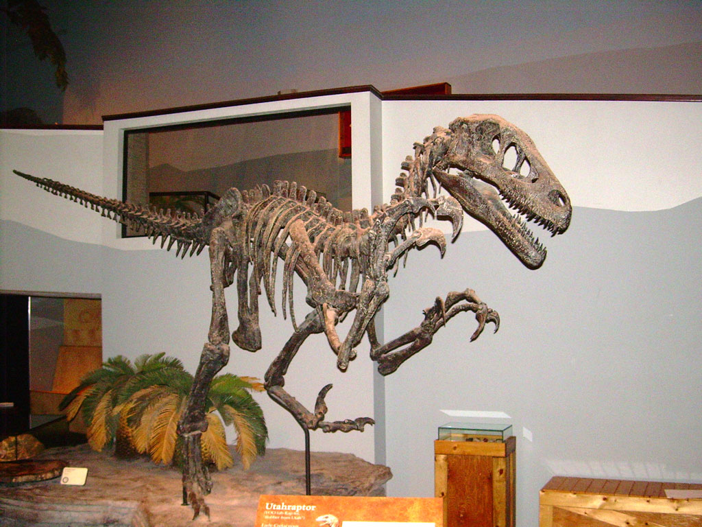 Description Utahraptor ostrommaysi skeleton JPGUtahraptor Skeleton