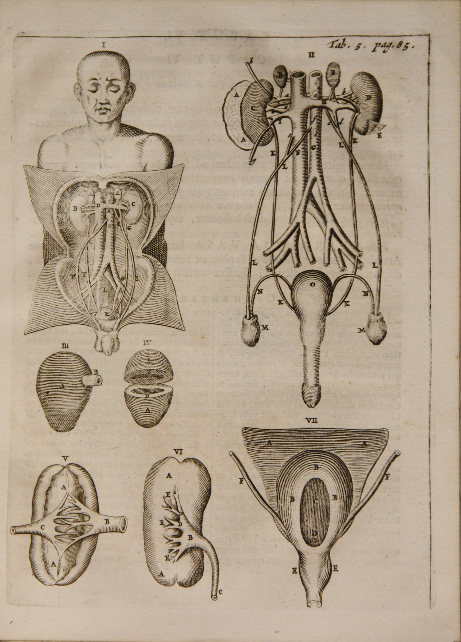diagram page from ''''Syntagma anatomicum''