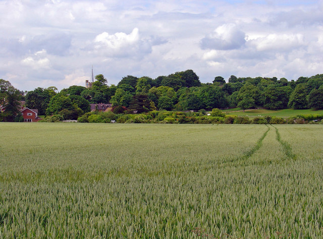 Wheat field near Pitstone Mill - geograph.org.uk - 844760