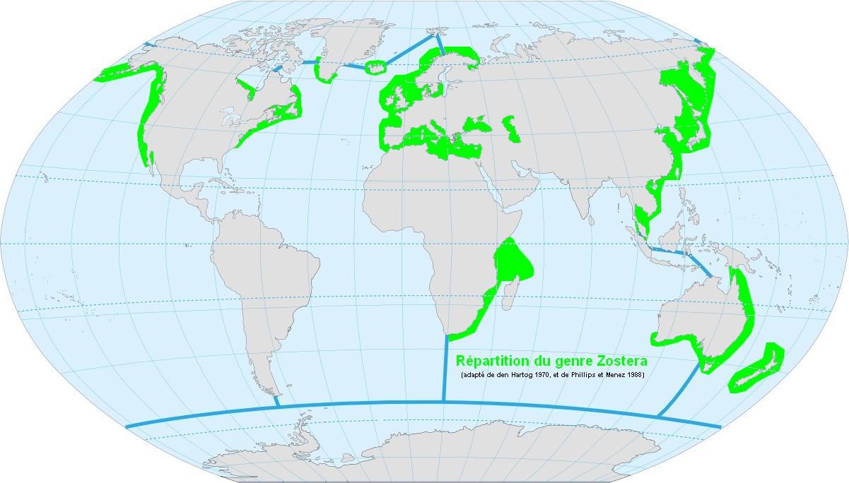 File:world Map Ocean Genuszosterag