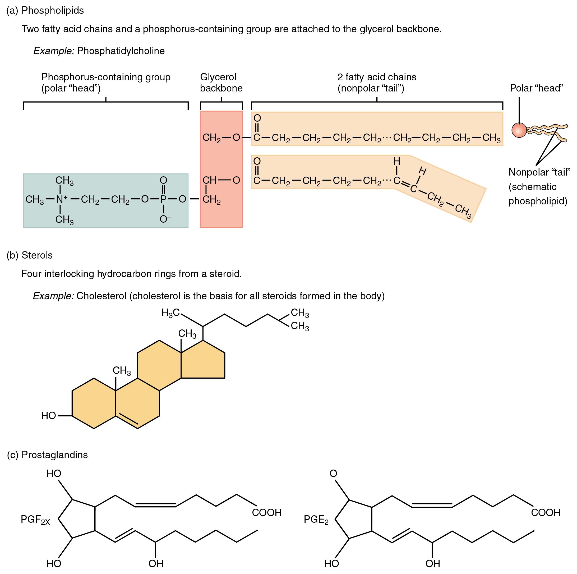 steroid free protein powder